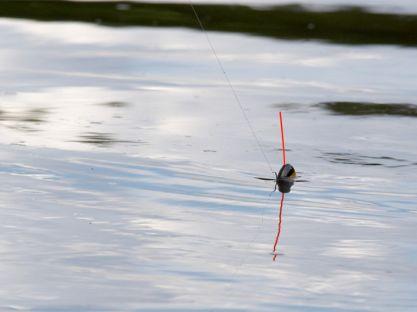 Выбор глубины ловли рыбы
