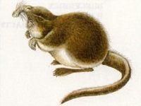 Выхухоль (Desmana moschata Linnaeus, 1758)