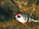 Ловля рыбы на нитку